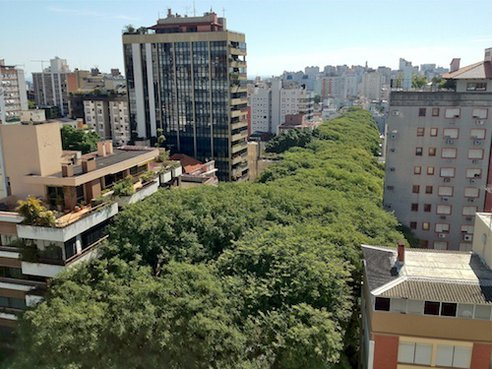 tree-street-overview.jpg.492x0_q85_crop-smart